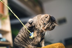 Best Toys For Cats: Fun Alert For The Furry Pals