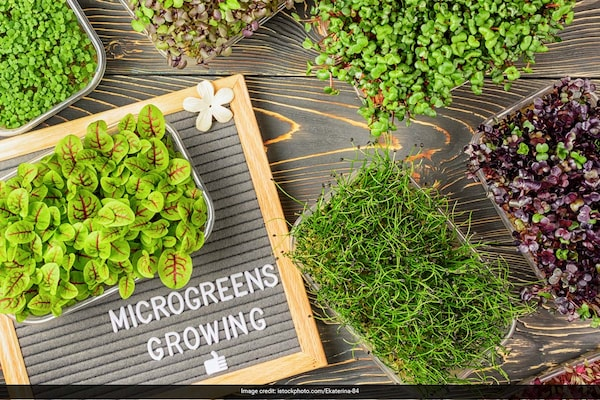 Everything You Need To Know About Microgreens