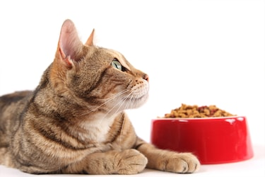 Dry Kitten Foods: Nutritional Supply For Your Young Feline Friends (2-12 Months)