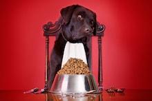 Dog Bowls: Serve Your Pet Happiness