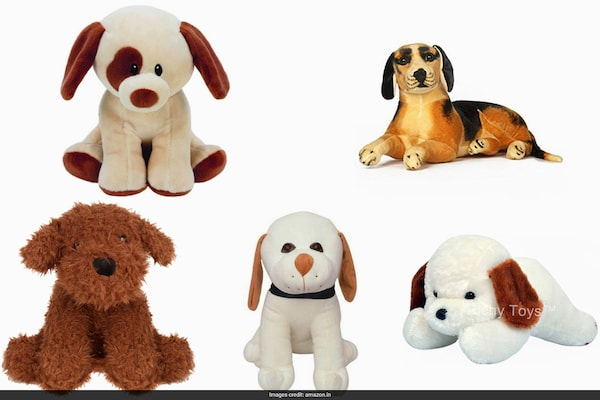 Adorable Teddy Dogs From Best Brands