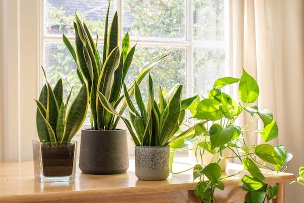 10 Best Indoor Plants For Your Desk