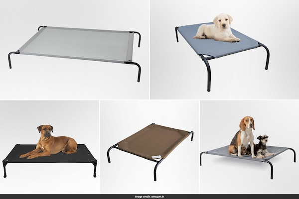 Best Elevated Cooling Beds For Pets