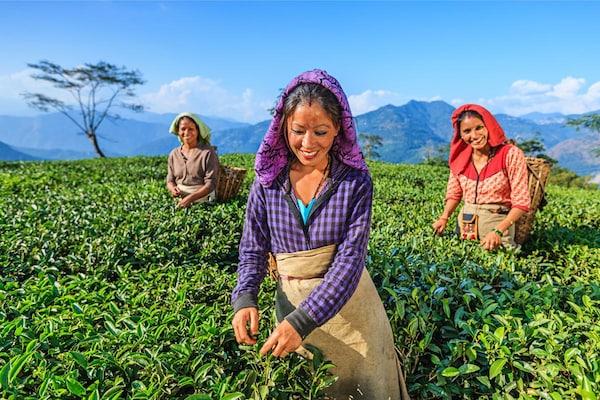 Best Indian Books On Organic Farming