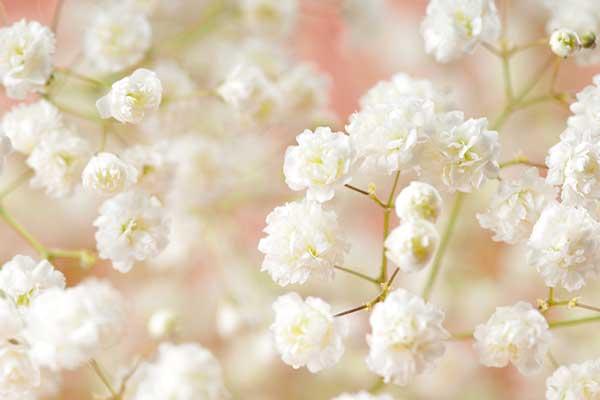 Baby's Breath Flowers