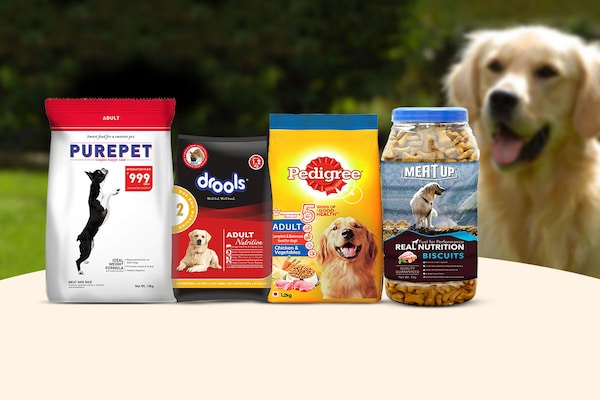 Food For Grown-Up Dogs: Complete Nutrition And Good Health