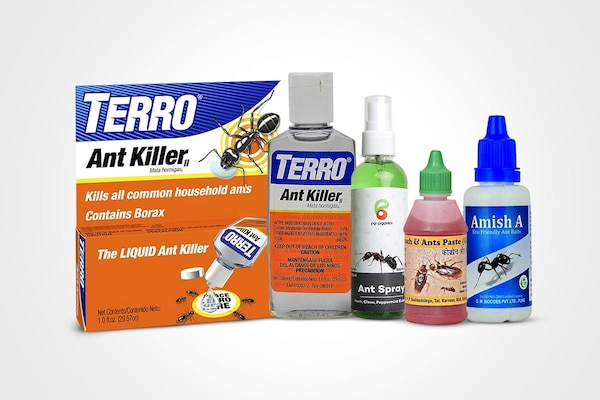 Best Ant Repellents For Your House