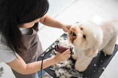 Keep Your Dogs Well-Groomed With These Best Hair Trimmers