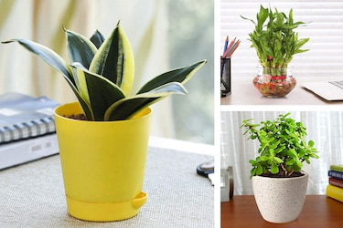 Get These Indoor Plants: Breathe Fresh And Live Healthy