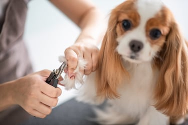 Best Pet Nail Clippers: Give Your Pet Well Shaped Nails