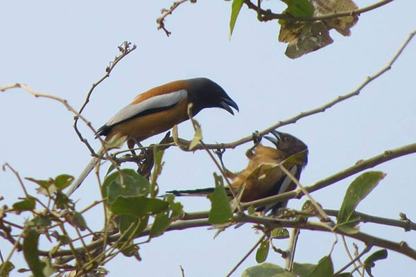 Best Time to Visit Pachmarhi Satpura National Park 600 1554448175703