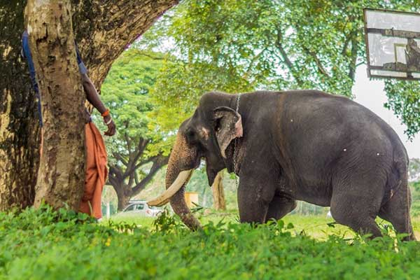 Best time to visit thrissur elephant 1556531779154