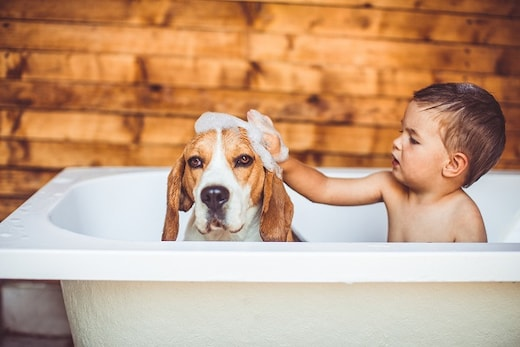Best Baby Shampoos For Your Little One. Let The Bath Be A Therapy For Your Baby!