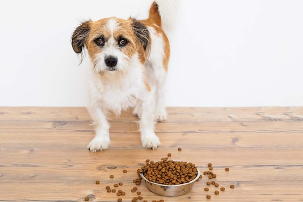 Best Dog Food in India