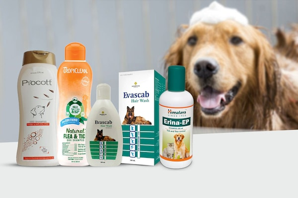 Best Dog Shampoos to Groom Your Pet Perfectly