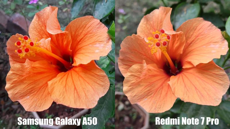 GalaxyA50vsRedmiNote7ProMacros Redmi Note 7 Pro vs Samsung A50