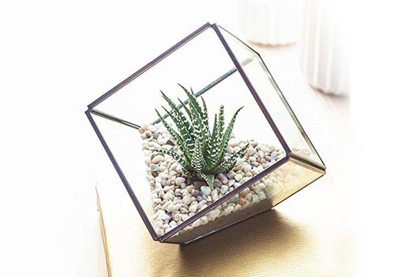 GIG Iron & Glass Metal Geometric Terrarium Tilted Cube Table Top/Planter
