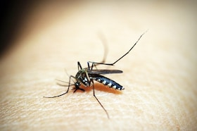 Natural Homemade DIY Mosquito Repellent Hack