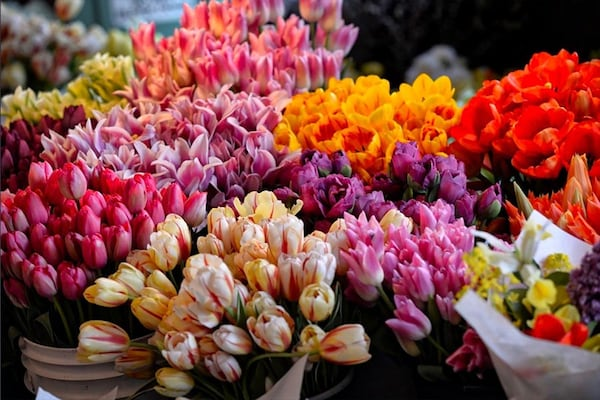 21 Most Beautiful Flowers