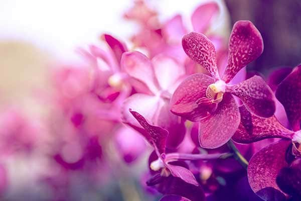 Orchid Flowers 1555320224321