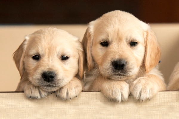 Pamper Your Puppies This Puppy Day