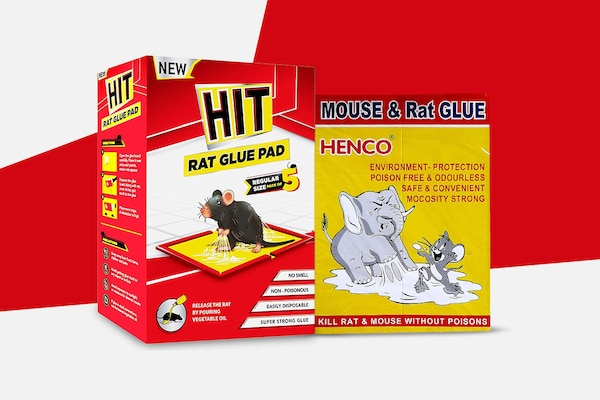 Glue Traps for Rats When Nothing Else Works