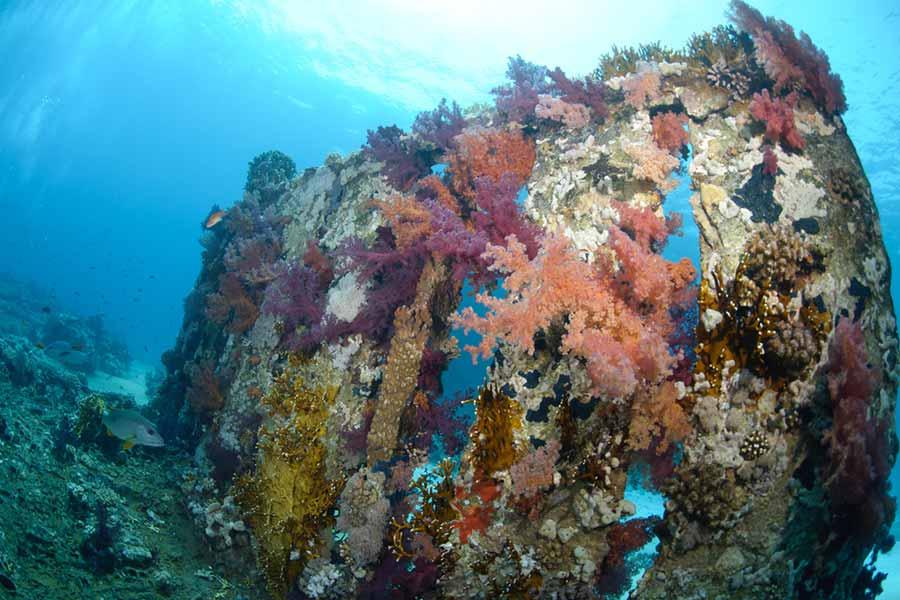 Best Scuba Diving Spots, Shark and Yolanda