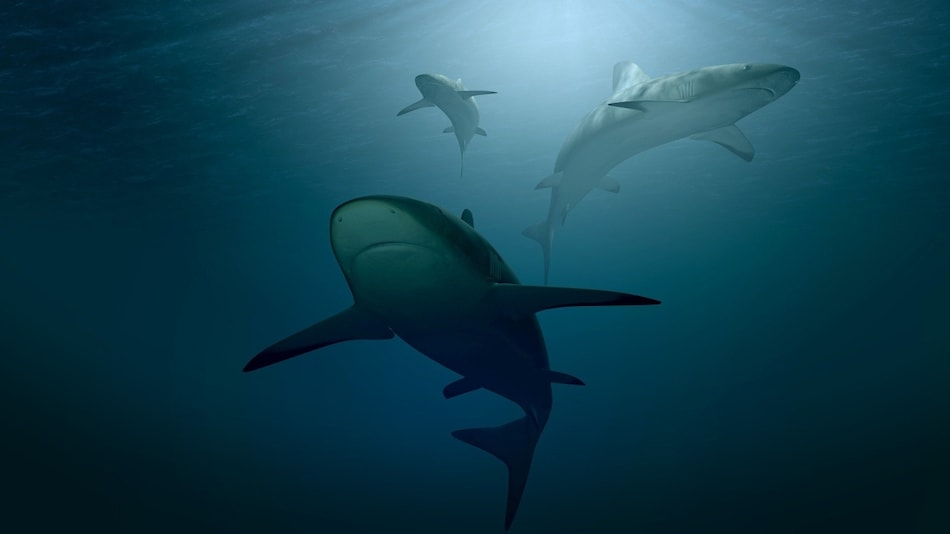 Mystery Event Decimated 90 Per Cent of Shark Diversity 19 Million Years Ago, New Study Finds