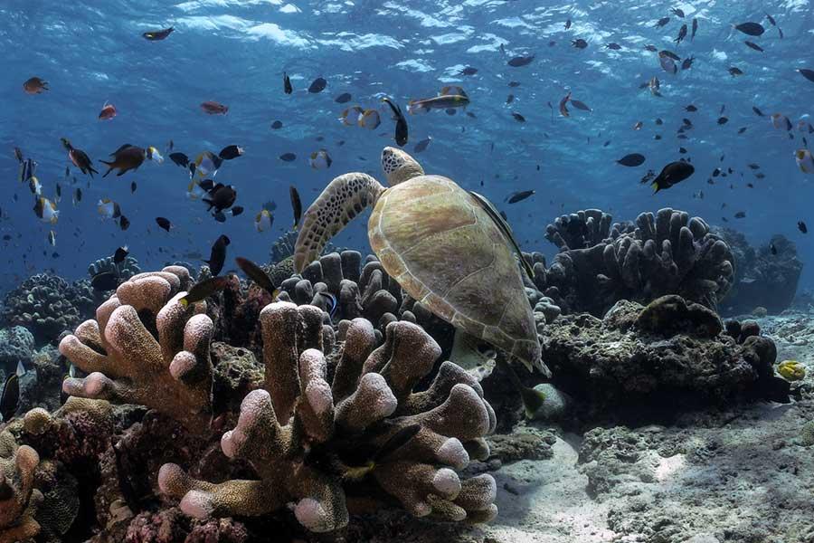 Best Scuba Diving Spots, Sipadan