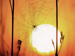 Ever Heard What a Spiderweb Sounds Like? It's Spookier Than Spiders