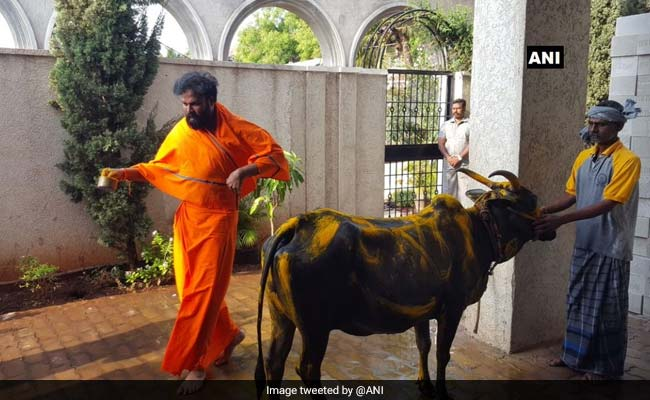 Before Voting, High-Profile BJP Candidate Sriramulu Performs Cow Worship