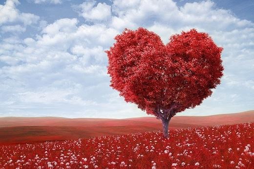 Valentine Week List, Dates, Schedule, Celebration And Gift Ideas