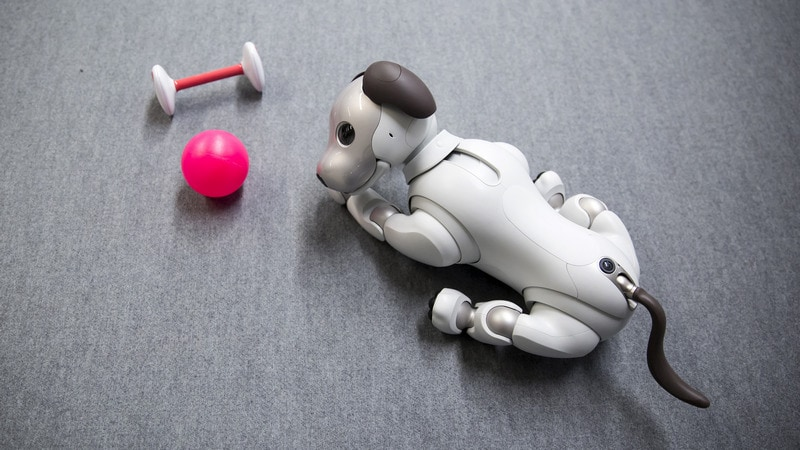 Meet Aibo, a Robot Dog That Will Melt Your Heart With Mechanical Precision