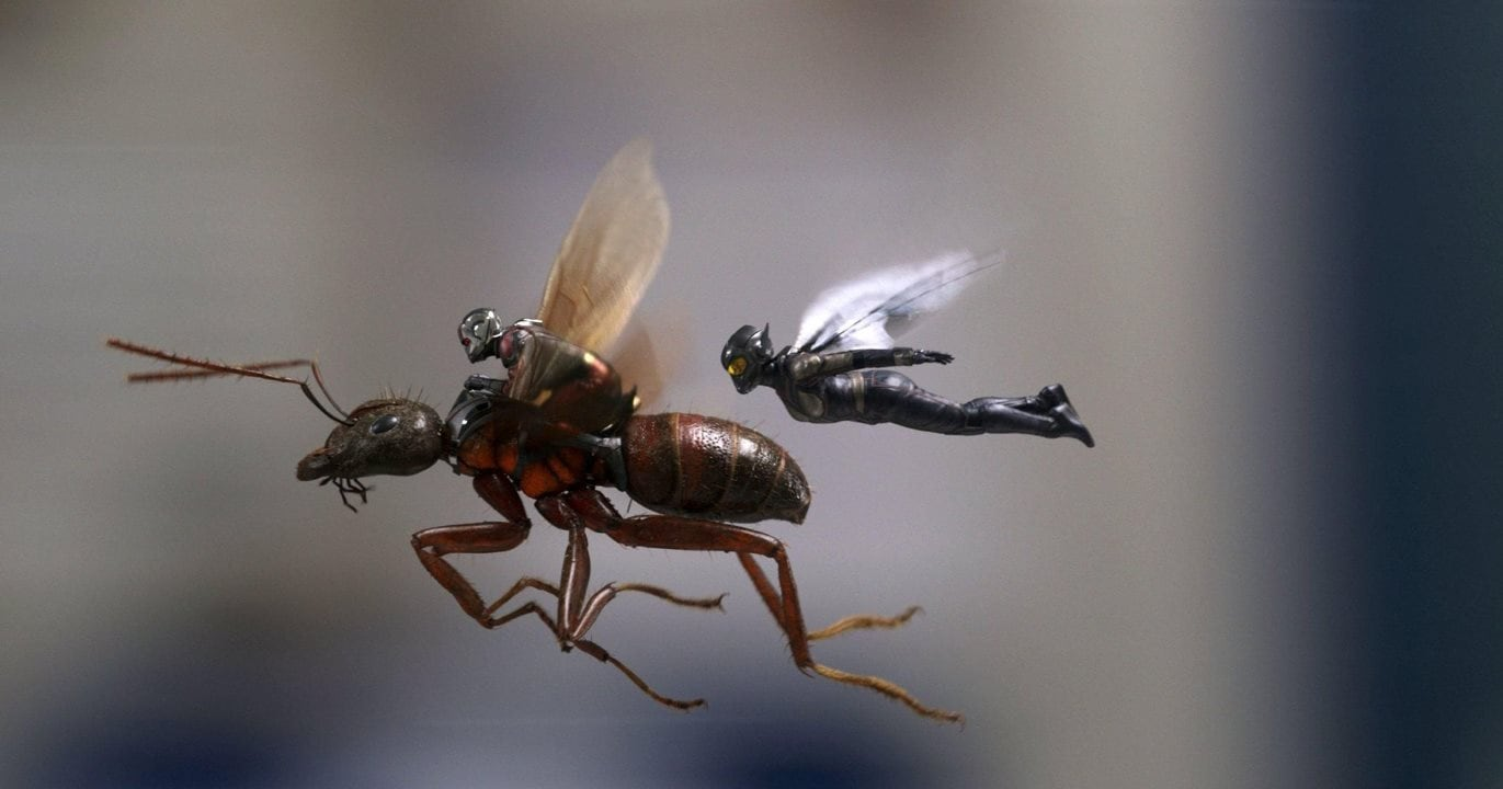 ant man and the wasp flying Ant Man and the Wasp