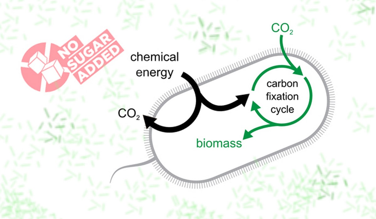 Researchers Develop Bacteria Which 'Eat' Carbon Dioxide