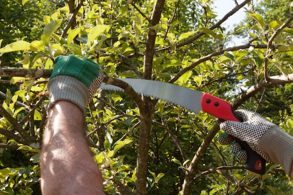 Pruning Saws That'll Help You Trim Or Cut Trees Like Professionals