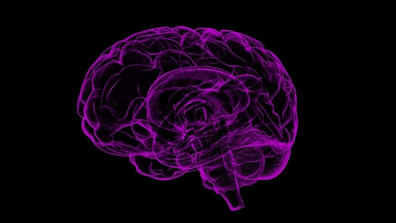 A Startup Says It Can Back Up Your Brain, With One Small Catch: You've to Die First