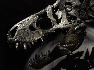 Fossil Reveals Unique Feature Of Dinosaur That Roamed Africa 150 Million Years Ago