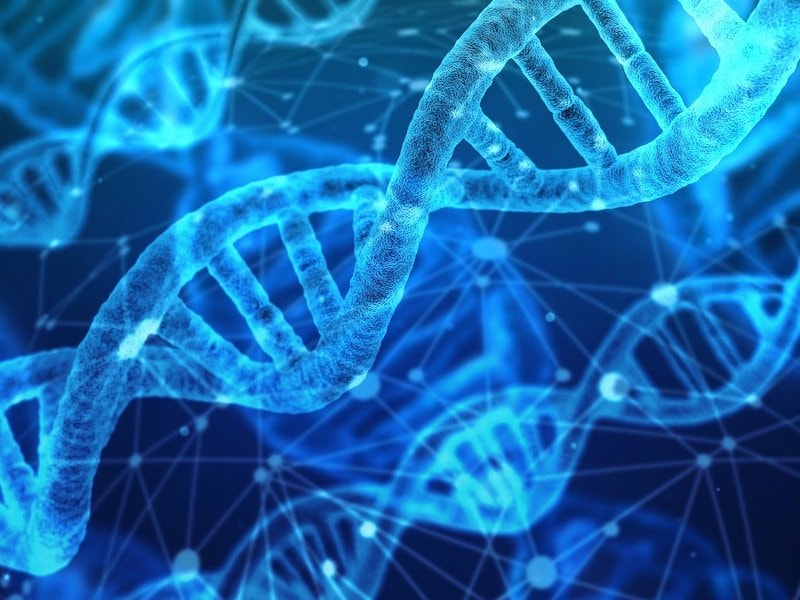 When DNA Speaks of Nature — the Use of Genetic Data in Biodiversity Research