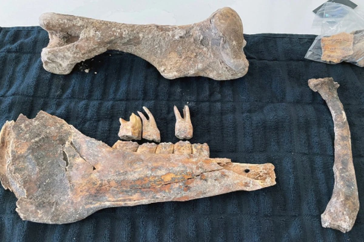 Fossils Discovered in Las Vegas Couple's Backyard Could Be of a Horse from Ice Age
