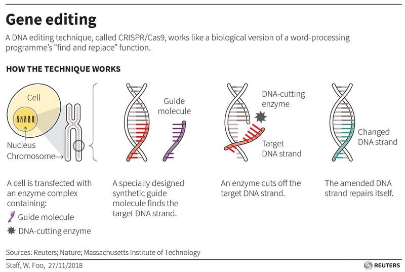 gene editing reuters Gene editing