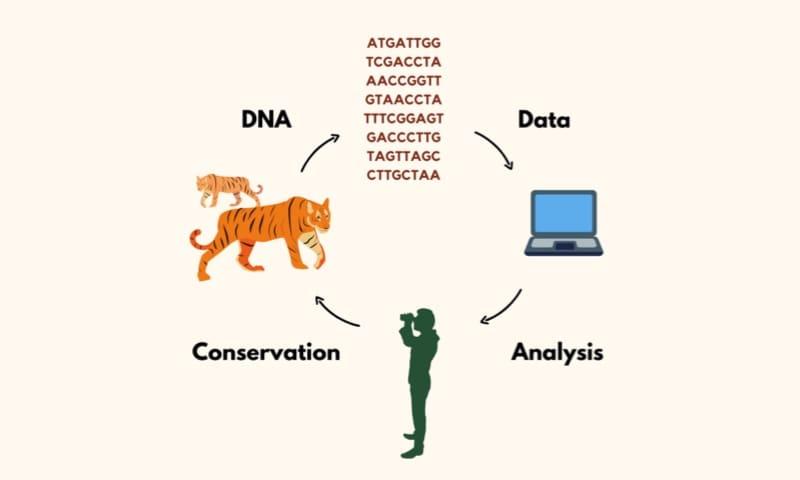 genome wildlife concept genomics
