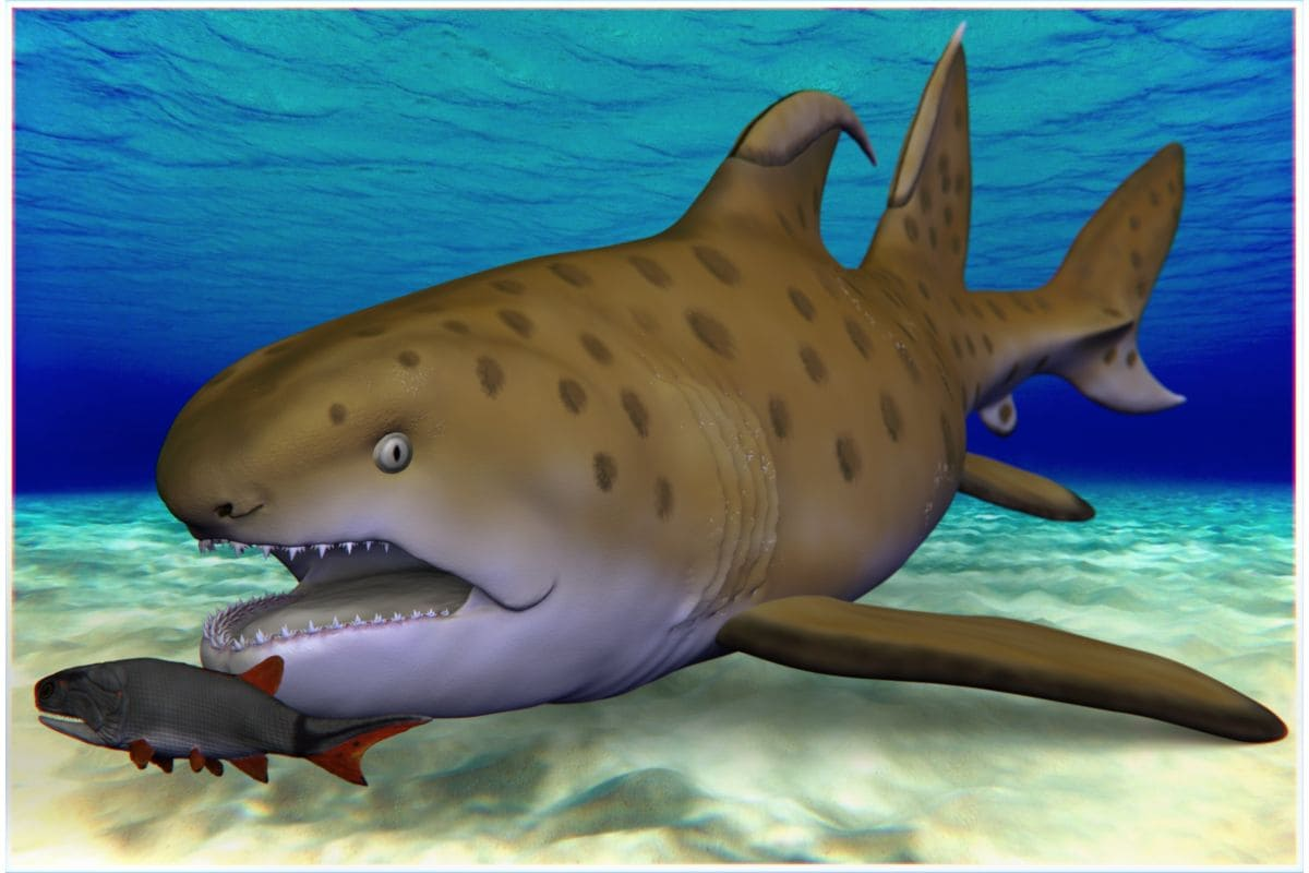 300-Million-Year-Old Godzilla Shark Discovered in New Mexico Gets a New Name - Gadgets 360