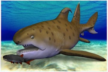 300-Million-Year-Old Godzilla Shark Discovered in New Mexico Gets a New Name