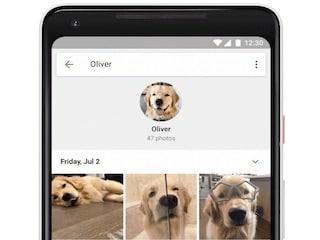 Google Photos Now Recognises Your Pets