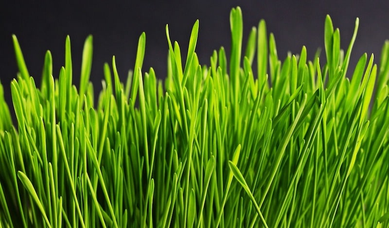 Grass Can Be Turned Into Jet Fuel, Scientists Claim