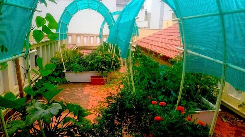 greentechlife crops Greentechlife