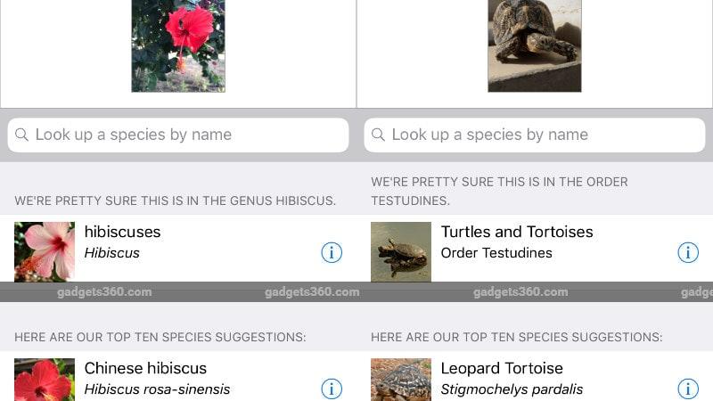 iNaturalist hibiscus turtle iNaturalist