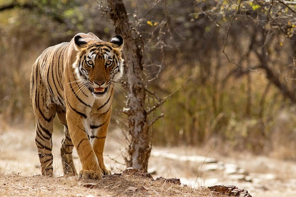 Delhi To Get Its First Wild Animal Rescue Centre By The End Of This Year