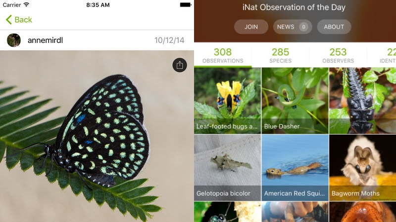 Inaturalist Is The App Every Wildlife Observer Needs Ndtv